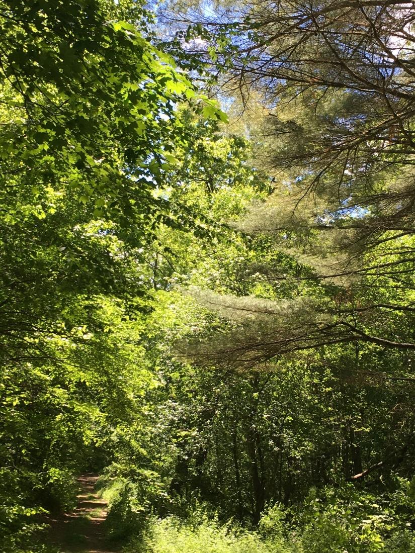shepaug trees