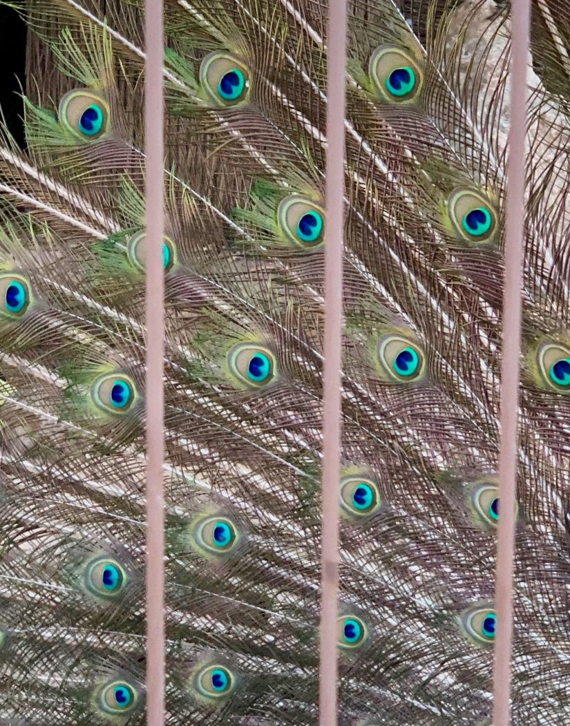 plumedetail